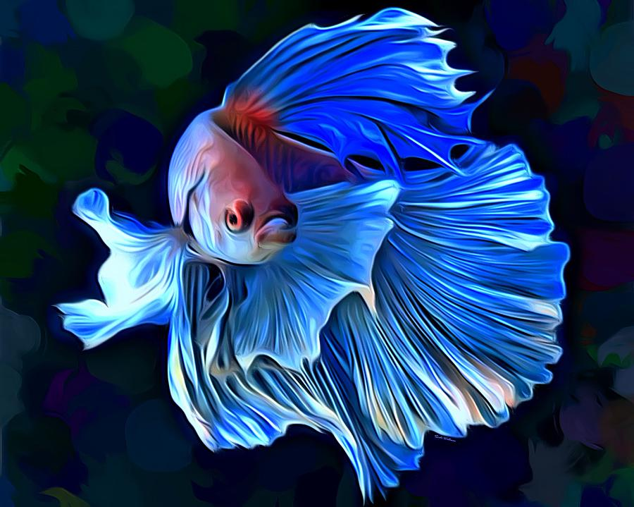 Betta fish 1 portrait digital art by scott wallace for Betta fish painting