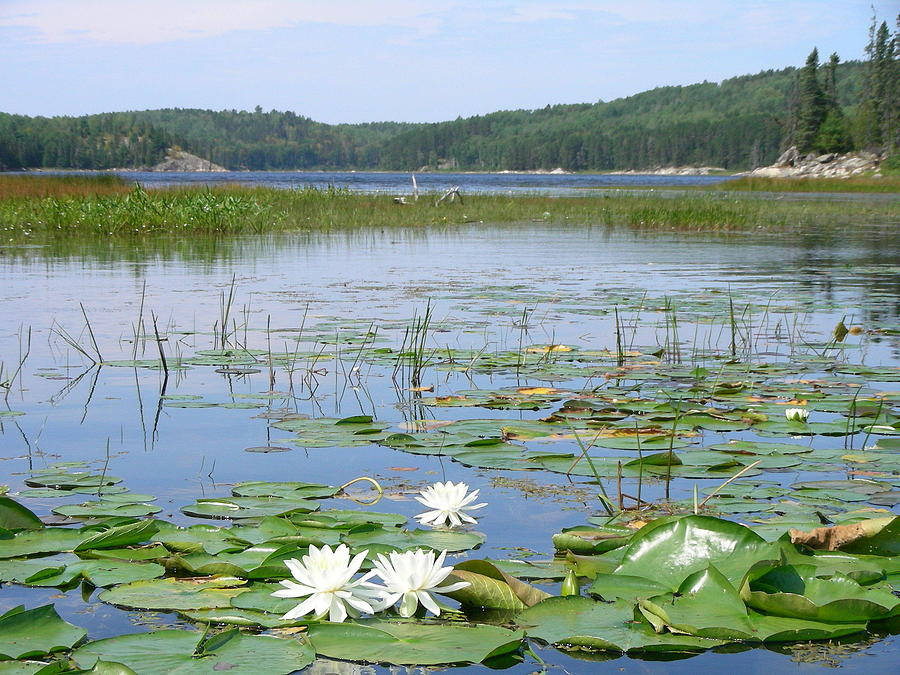 Lake Photograph - Beyond The Lilly Pads by Peter  McIntosh