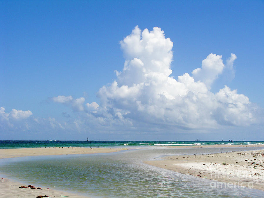 Beach Photograph - Big Florida Cotton  by Jack Norton