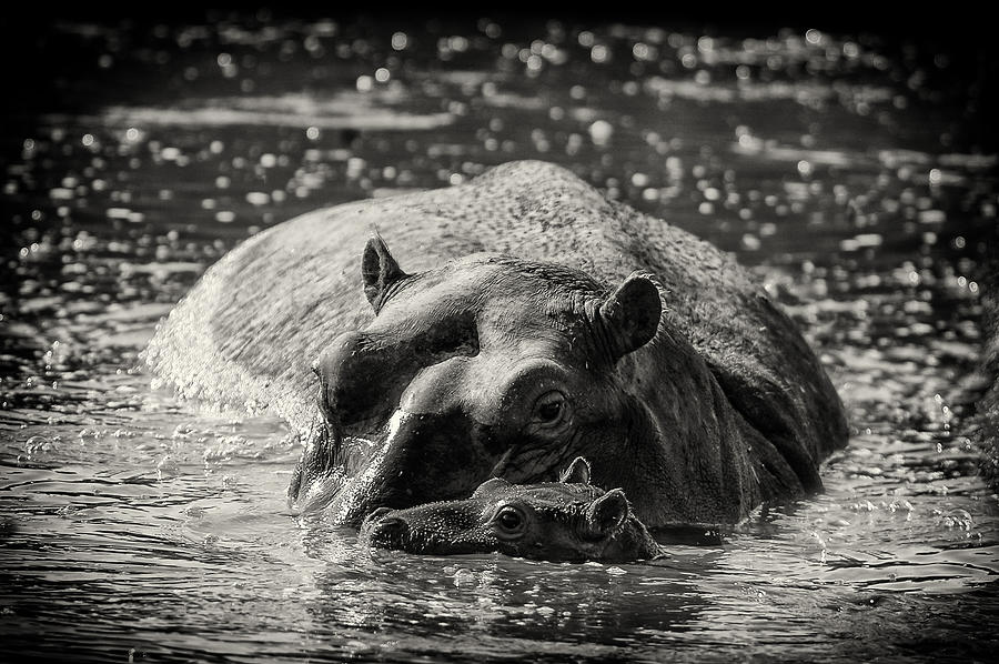 Big Mama is a photograph by Nichon Thorstrom which was uploaded on ...