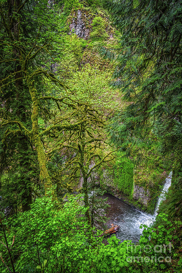 Bigfoot Photograph - Bigfoot Country by Jon Burch Photography