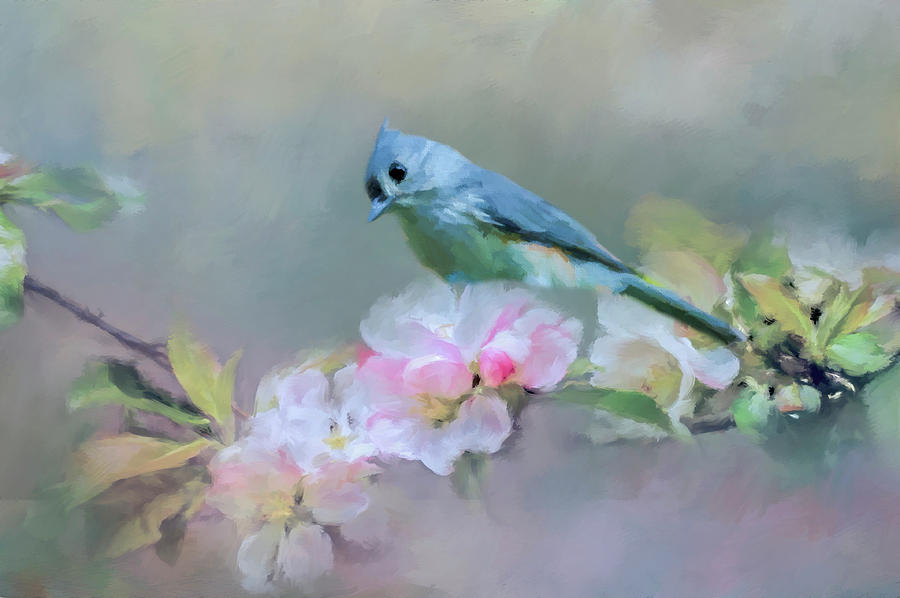 Bird And Blossoms Photograph