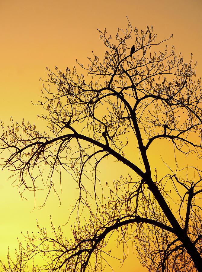 Sunset Photography. Bird In Tree. Bird Photography. Yellow Sunset. Fine Art Photography Greeting Cards. Fine Art Photography. Sunset Greeting Cards. Tree Photography. Fine Art Wall Photography. Wildlife Photography.  Photograph - Bird At Sunset by James Steele