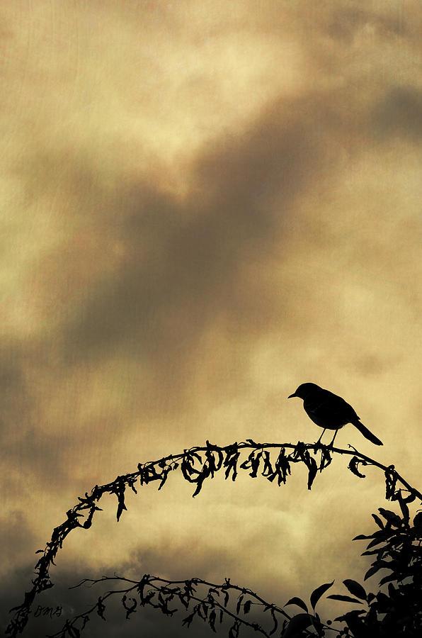 Bird Photograph - Bird On Branch Montage by Dave Gordon
