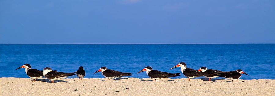 Birdline Photograph