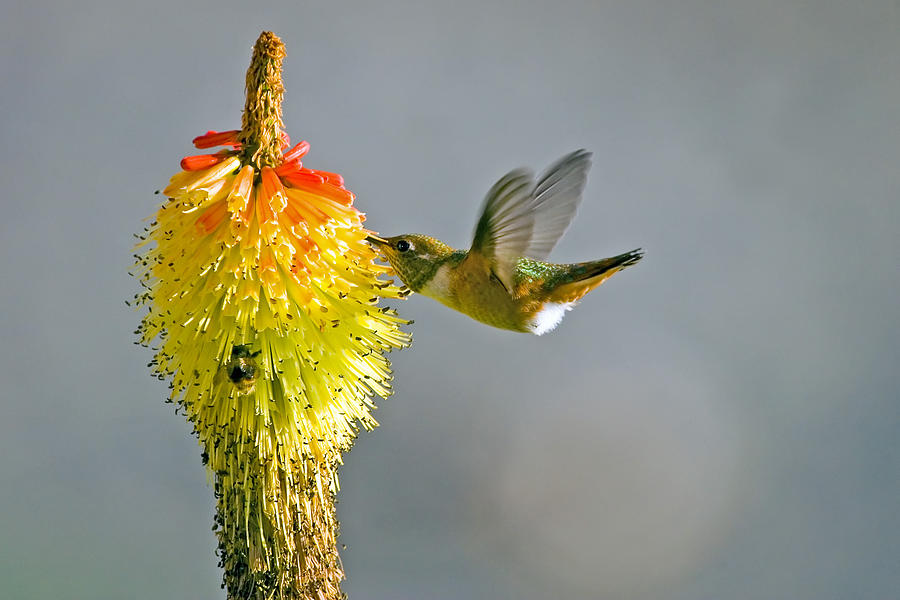Hummingbird Photograph - Birds And Bees by Mike  Dawson