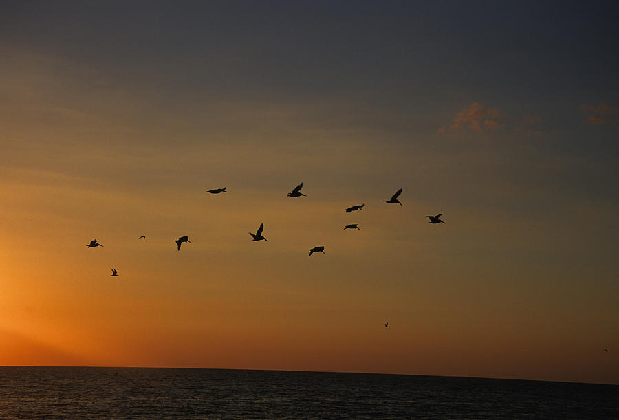 Birds Fly Into The Wind Above The Gulf Photograph
