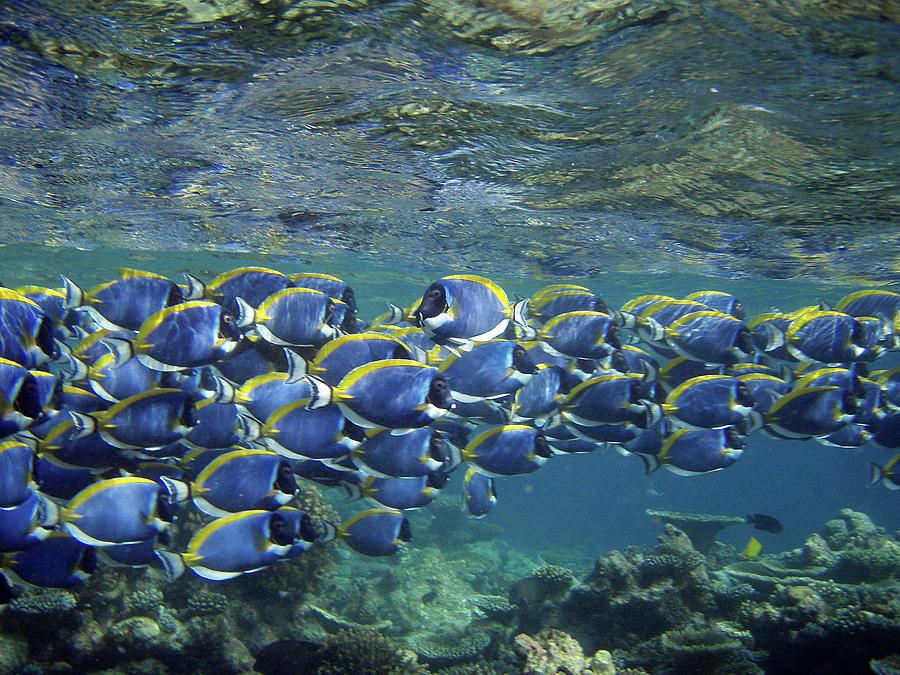 Horizontal Photograph - Biyadoo, South Male Atoll, Maldives by Federica Grassi