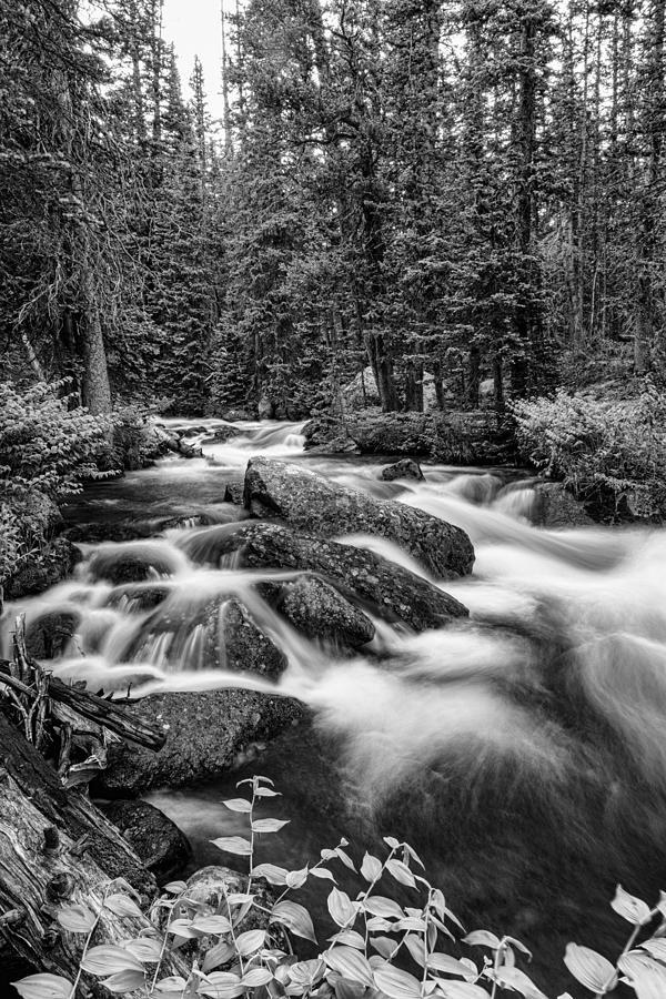 Black And White Roosevelt National Forest Stream Portrait Photograph