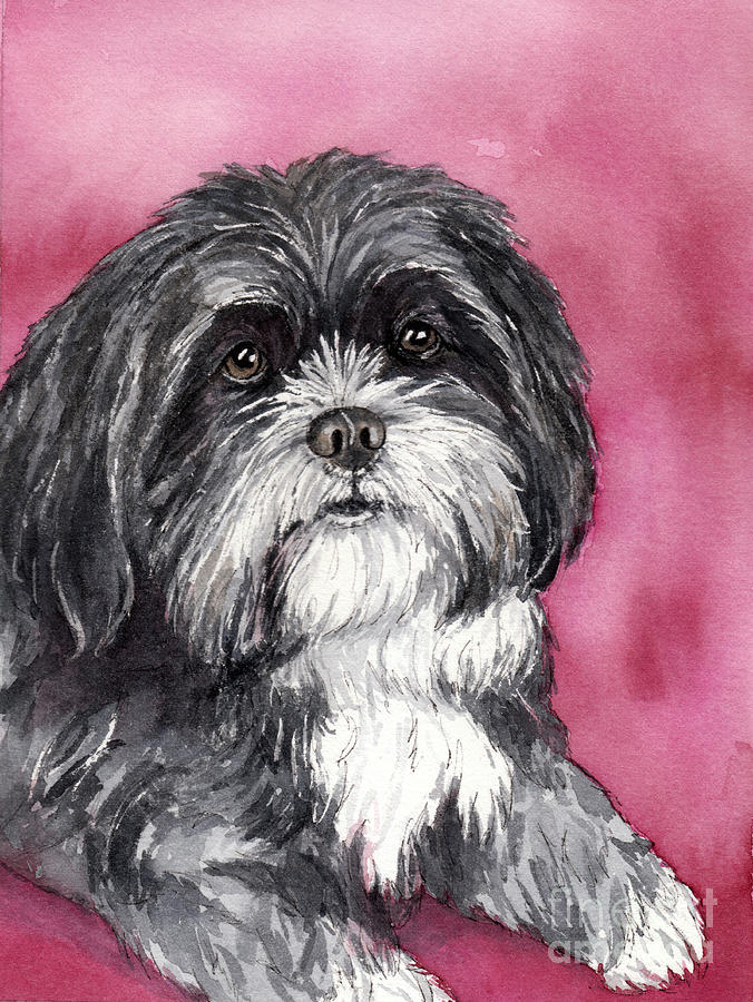Watercolor Pet Portrait Painting - Black And White Shih Tzu by Cherilynn Wood