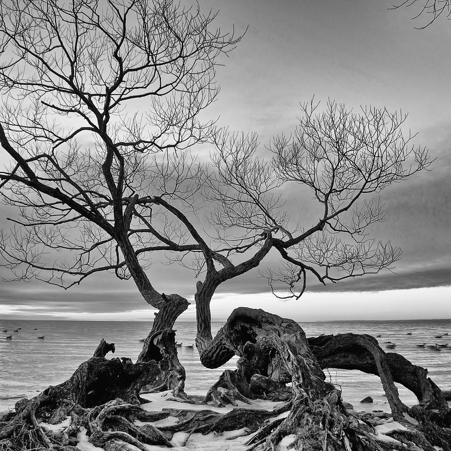 Black And White Tree Photograph By Andre Distel