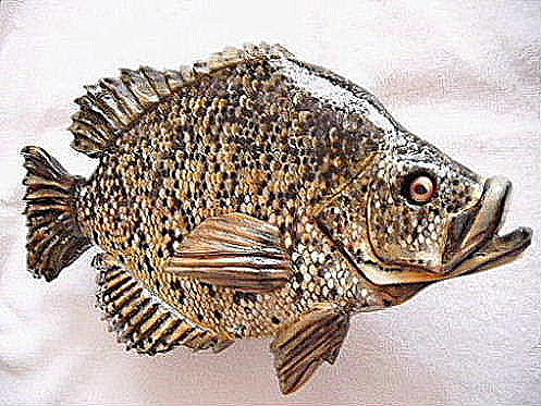 Fish Relief - Black Crappie Number One by Lisa Ruggiero