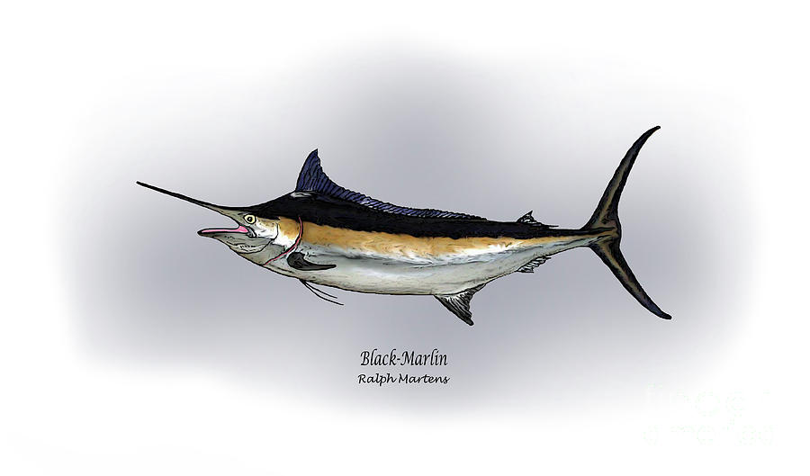 Black Marlin Drawing - Black Marlin by Ralph Martens