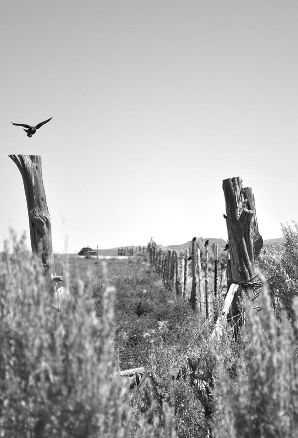 Blackbird Fly Photograph