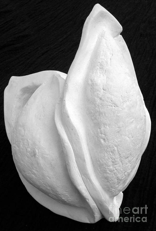 Plaster Sculpture - Bleached Husk by Xoey HAWK