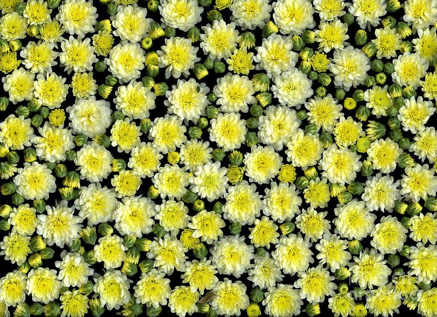 Blossoms Photograph - Blossoms by Christian Slanec