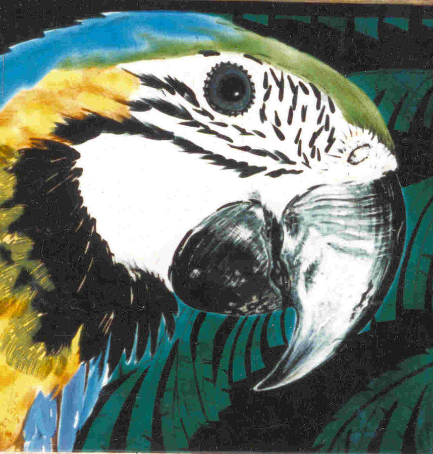 Macaw Painting - Blue And Gold Macaw by Dy Witt