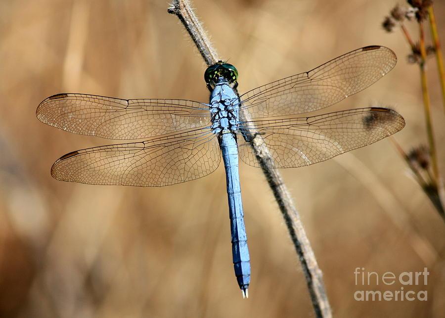 Blue Beauty Photograph