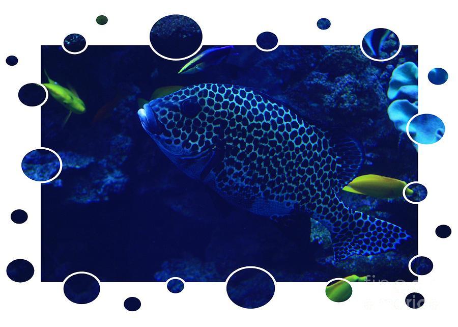 Blue Photograph - Blue Fish by Carol Groenen
