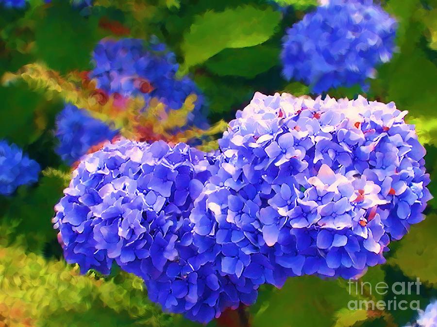 Blue Hydrangea Photograph - Blue Hydrangea by Methune Hively