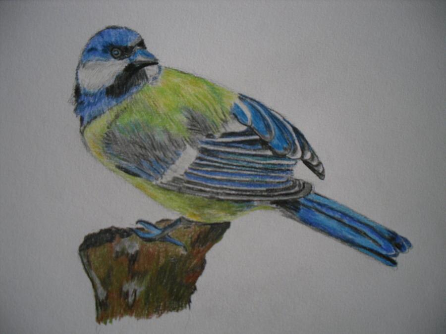 Bird Drawing - Blue Tit by Tanya Patey