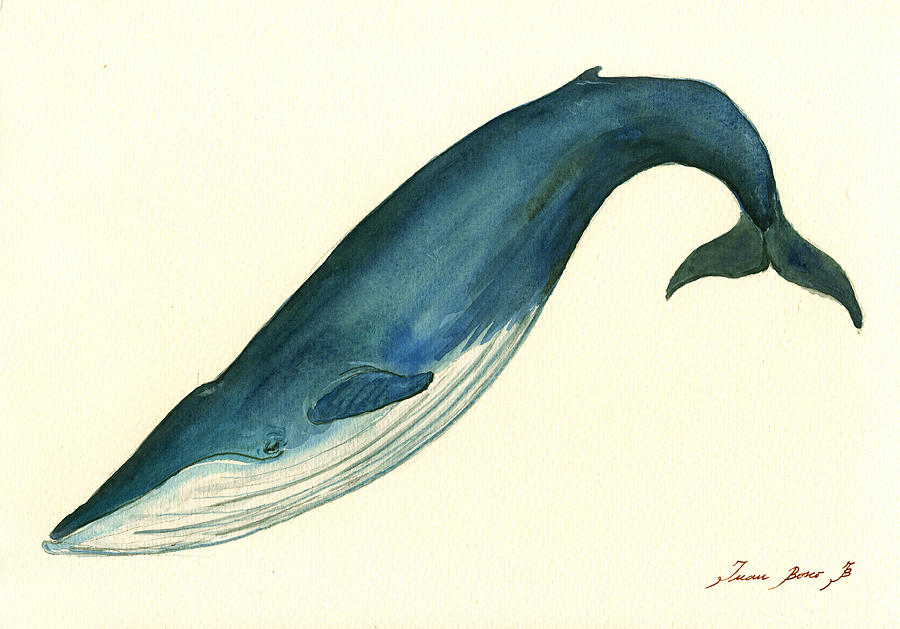 Blue Whale Painting Painting by Juan Bosco