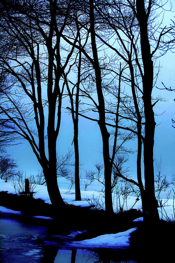 Woods Photograph - Blue Woods by Karol Livote