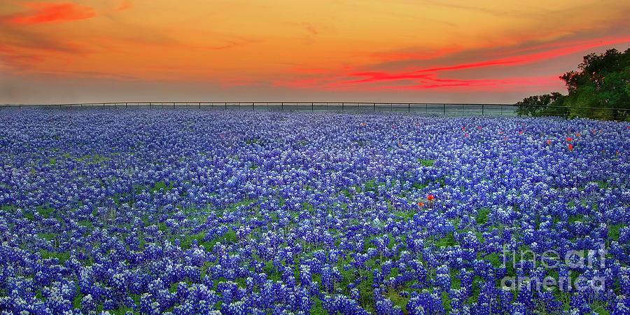 Texas Bluebonnets Photograph - Bluebonnet Sunset Vista - Texas Landscape by Jon Holiday