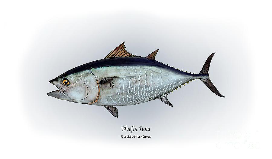 Bluefin Tuna Painting - Bluefin Tuna by Ralph Martens