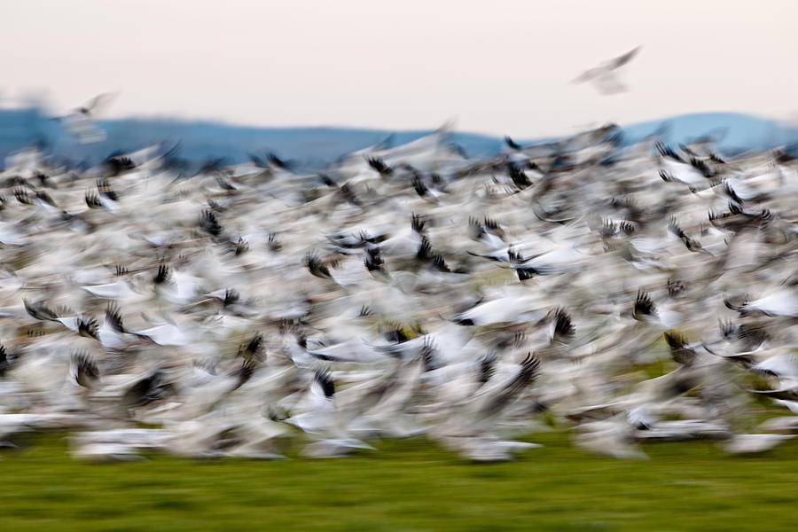 Blurry Birds In A Flurry L467 Photograph
