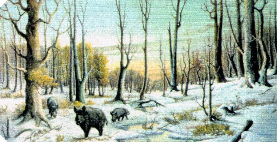 Boars In Winter - Sold Painting