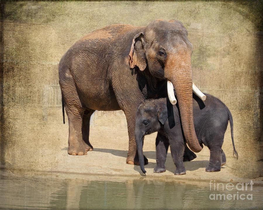 Bonding Asian Elephants Houston Zoo Photograph By Tn Fairey