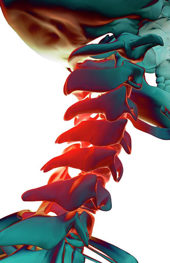 Vertical Digital Art - Bones Of The Neck by MedicalRF.com