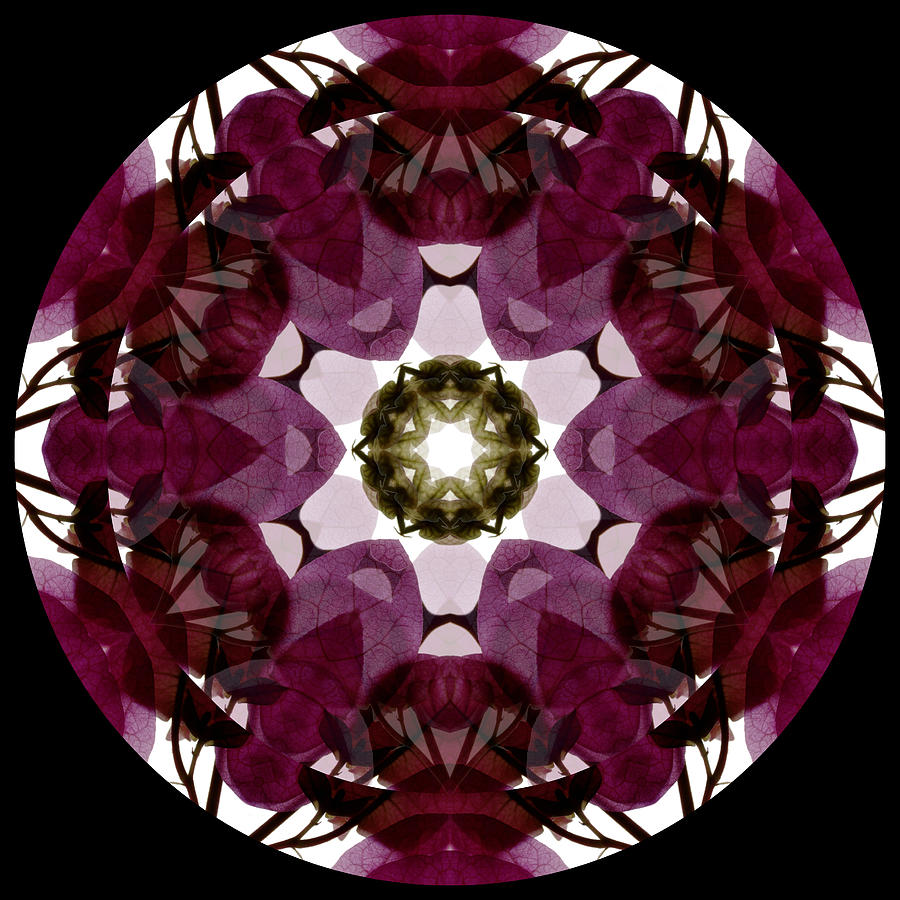 Mandala; Floral; Botanical; Scanner Photography; Scanography; Magenta; Bougainvillea;  Leaves;  Photograph - Bougainvillea Transparency 1 by Marsha Tudor