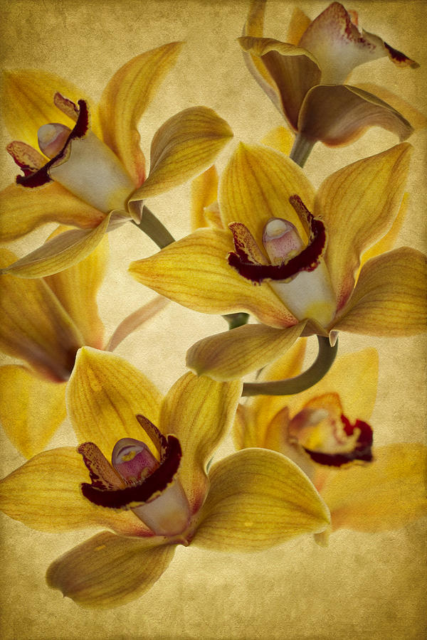 Orchid Photograph - Bouquet by Rebecca Cozart