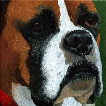 Dog Portrait Painting - Boxer by Linda Apple