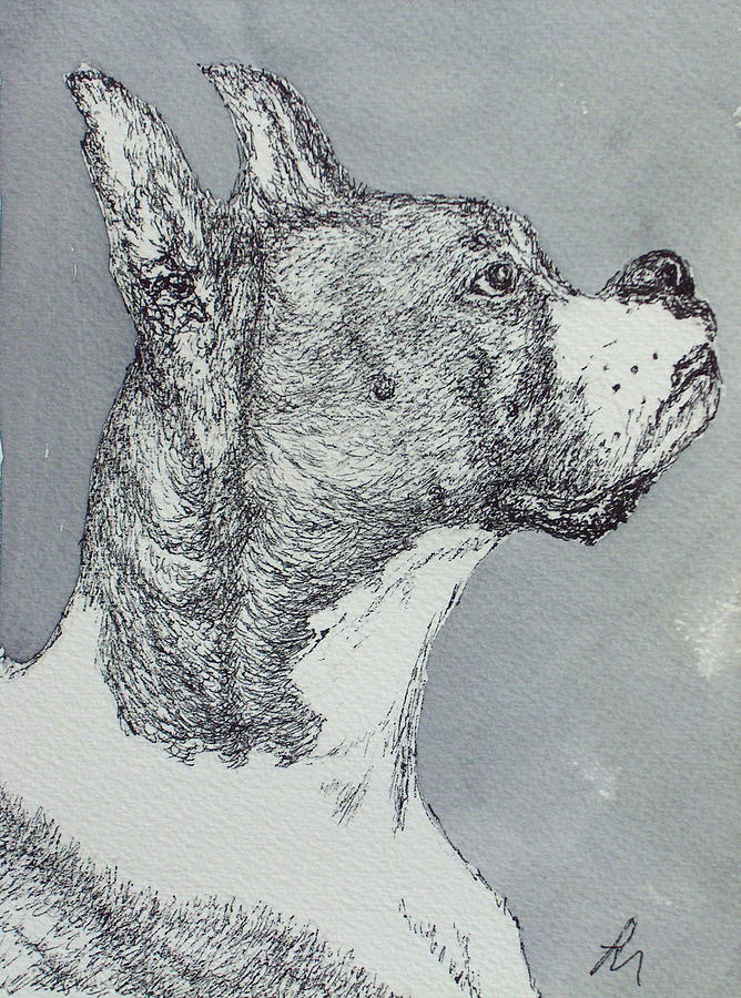Dog Drawing - Boxer by Pete Maier