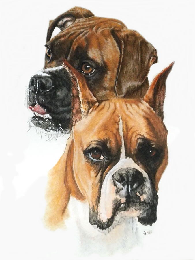 Pet Painting - Boxers by Barbara Keith