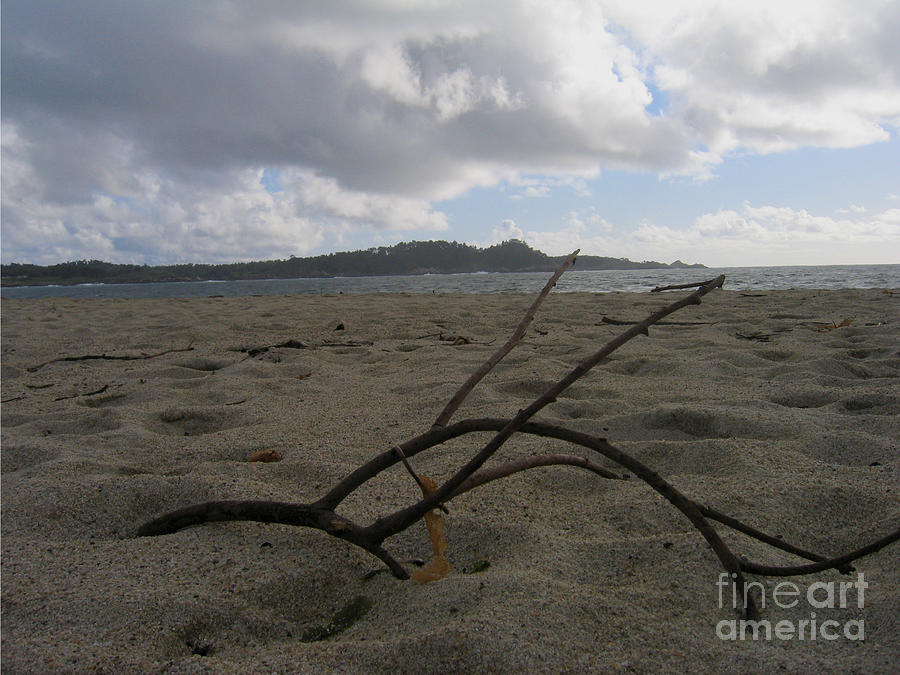 Branch On A Beach Photograph