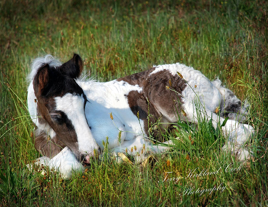 Horse Photograph - Brand New Isaac by Terry Kirkland Cook