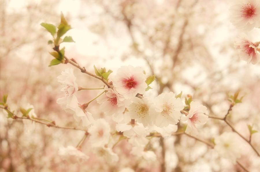Cherry Blossom Photograph - Breathe - Holmdel Park by Angie Tirado