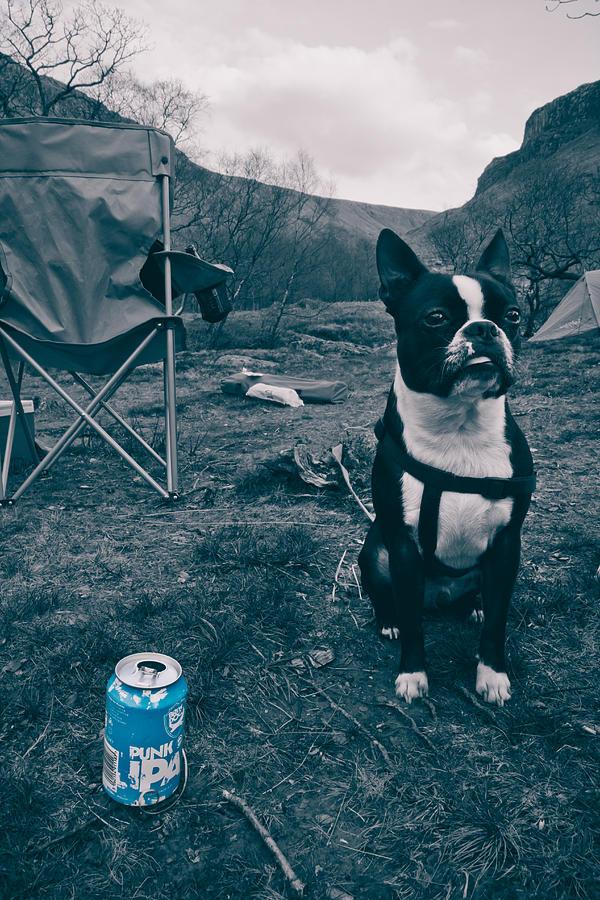 Beer Photograph - Brewdog Bull by Justin Albrecht