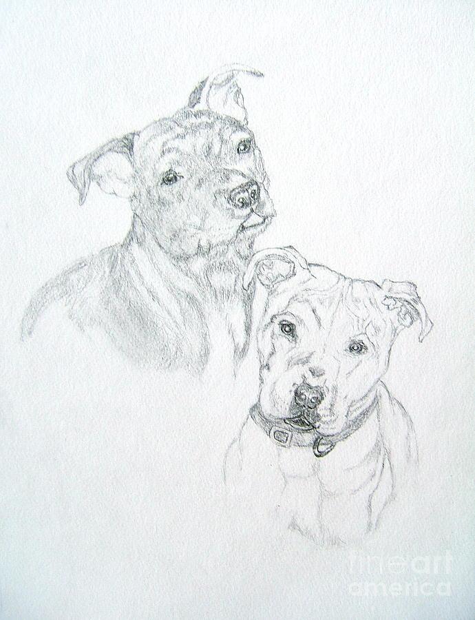 Mans Best Friend Pencil Drawing Drawing - Brittney by Nancy Rucker