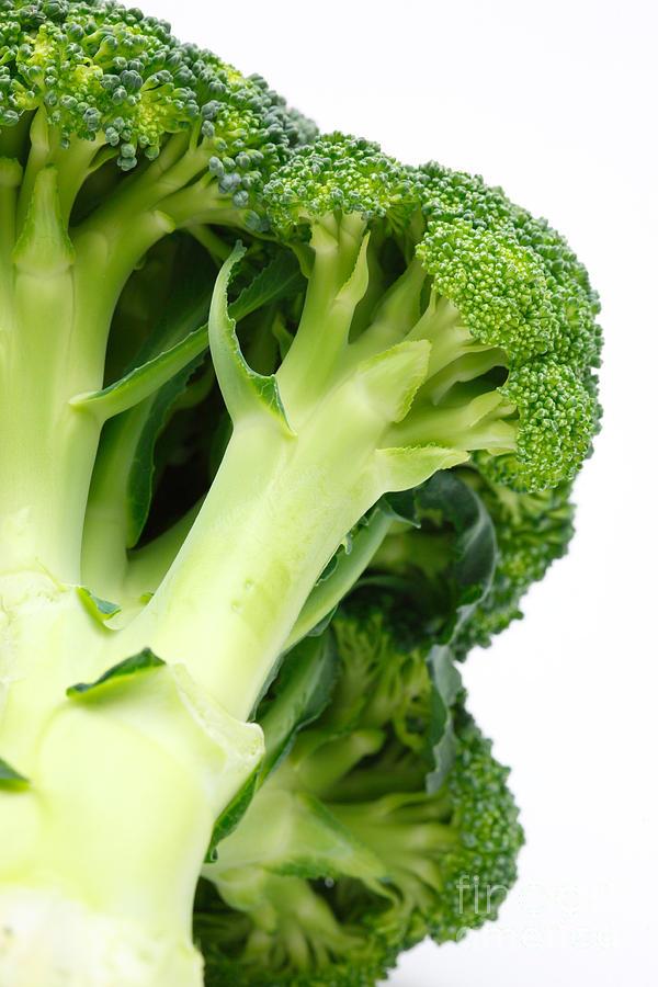 Broccoli Photograph - Broccoli by Gaspar Avila