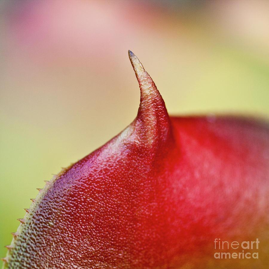Leaf Photograph - Bromeliad by Heiko Koehrer-Wagner