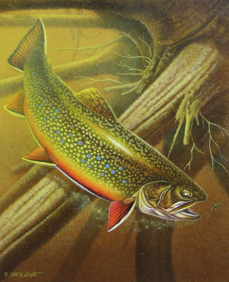 Jon Q Wright Brook Trout Fly Fishing Fly Fish Fishing Nymph Stream River Lake Painting - Brook Trout Cover by JQ Licensing