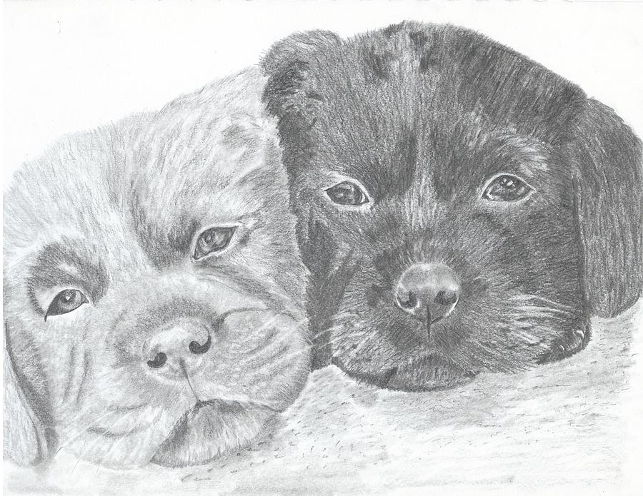 Puppies Drawing - Brothers by DebiJeen Pencils