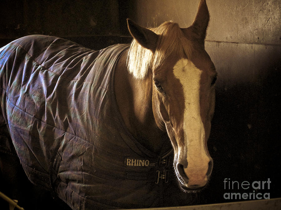 Horse Photograph - Brownie by Valerie Morrison