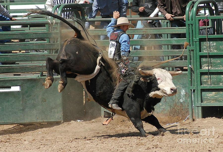 Rodeo Photograph - Bucking Bulls 101 by Cheryl Poland
