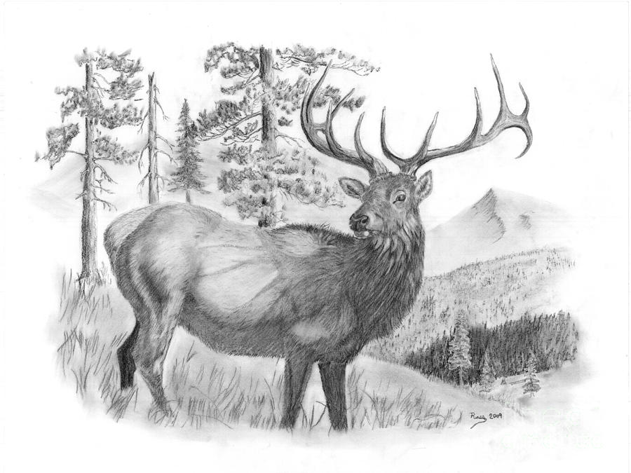 Bull Elk Drawing by Russ Smith